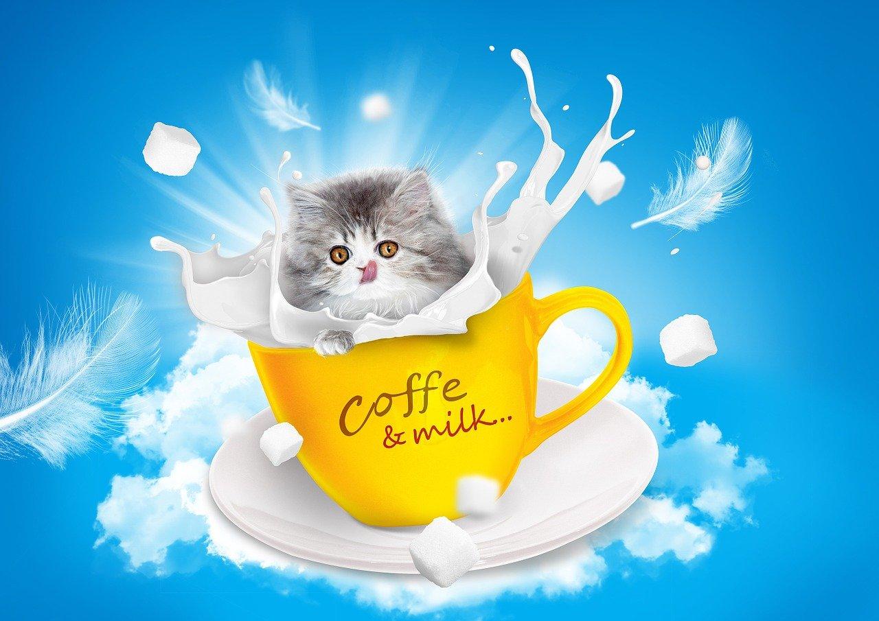 cat-1027486_1280.jpg